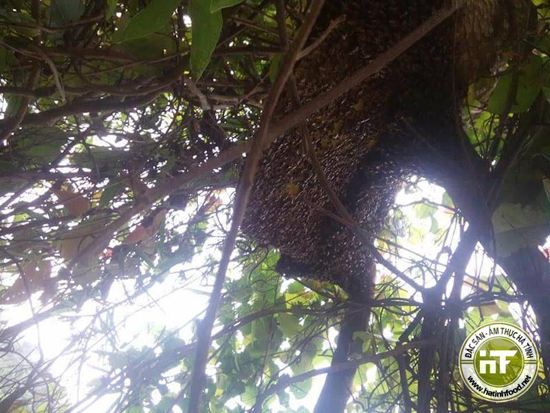 mat ong rung 1 - Mật ong rừng