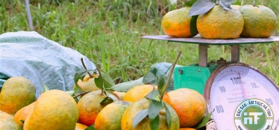 Ngọt thơm đặc sản cam bù Hương Sơn